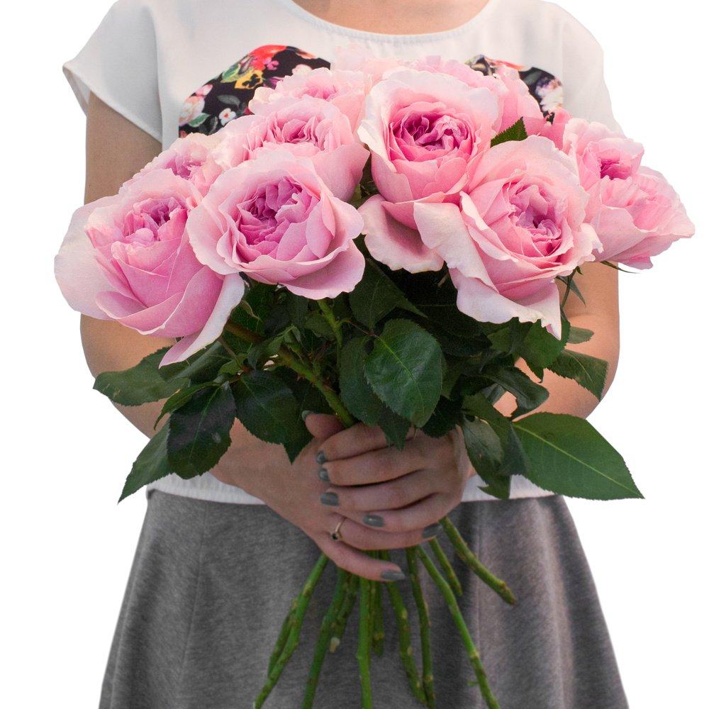 Роза пионовидная Миранда (Дэвид Остин)