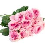 Букет пионовидная роза Дэвида Остина Миранда в Санкт-Петербурге