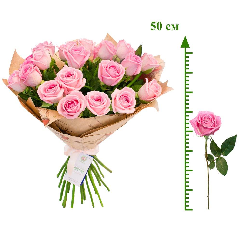 Роза Аква (50 см)
