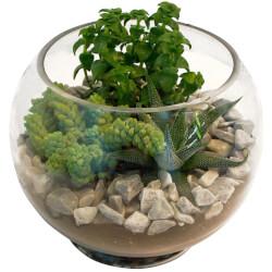 Имитация террариума в стеклянной вазе.