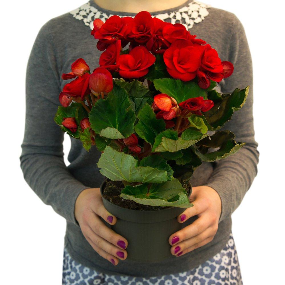 Цветы подарки с доставкой санкт-петербург 55