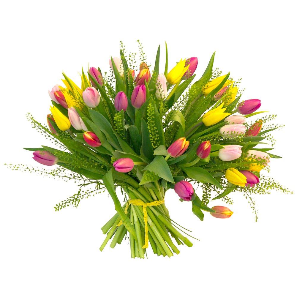 Tulipa. Разноцветный