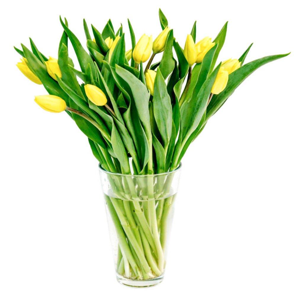Жёлтые тюльпаны