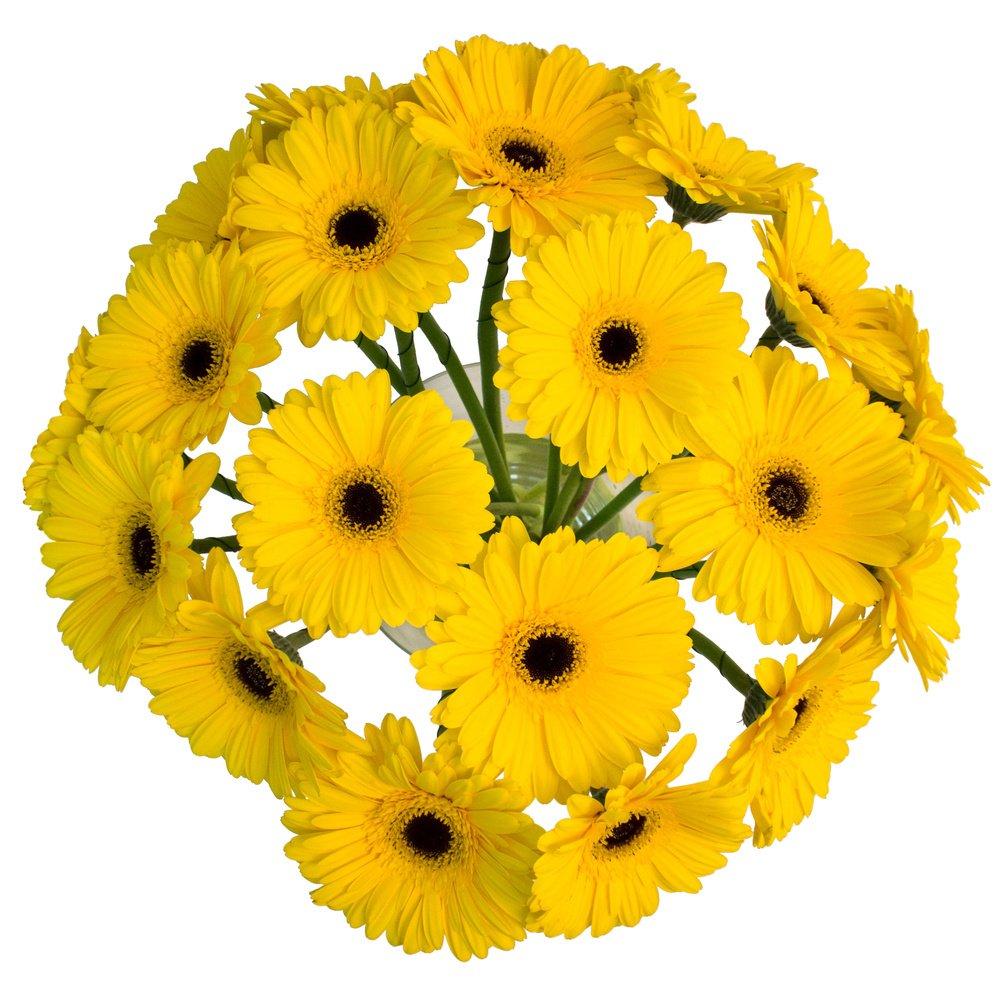 Жёлтые герберы