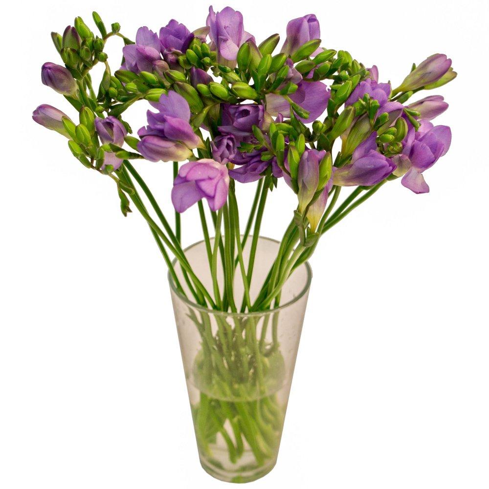 Фиолетовая фрезия