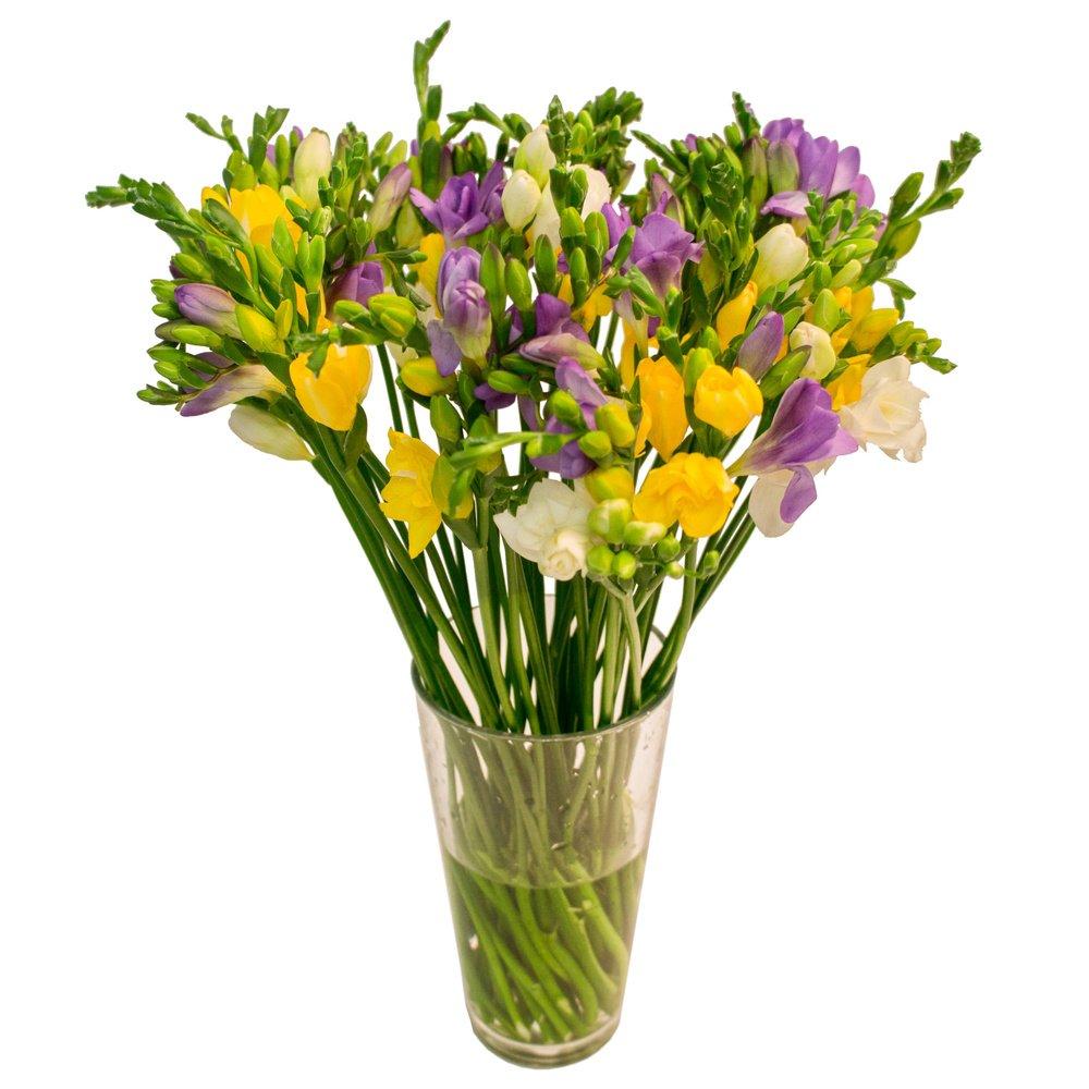 Амариллис цветы, фрезия белая срезанные цветы купить