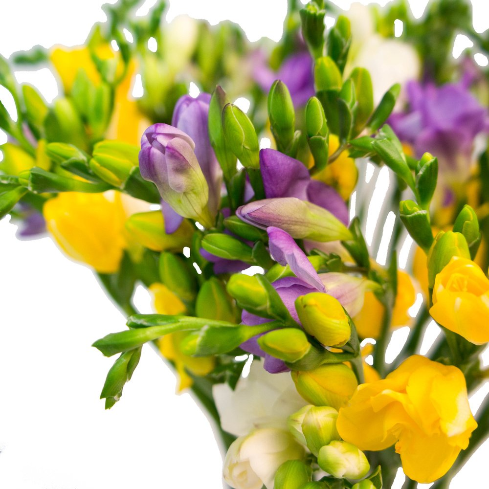 Цветы весны в букетов названия, букет
