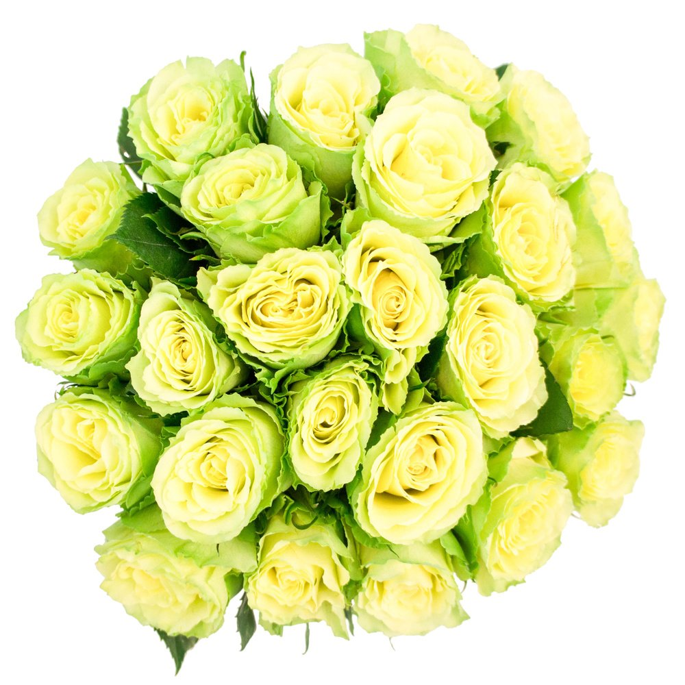 Роза зелёная микс