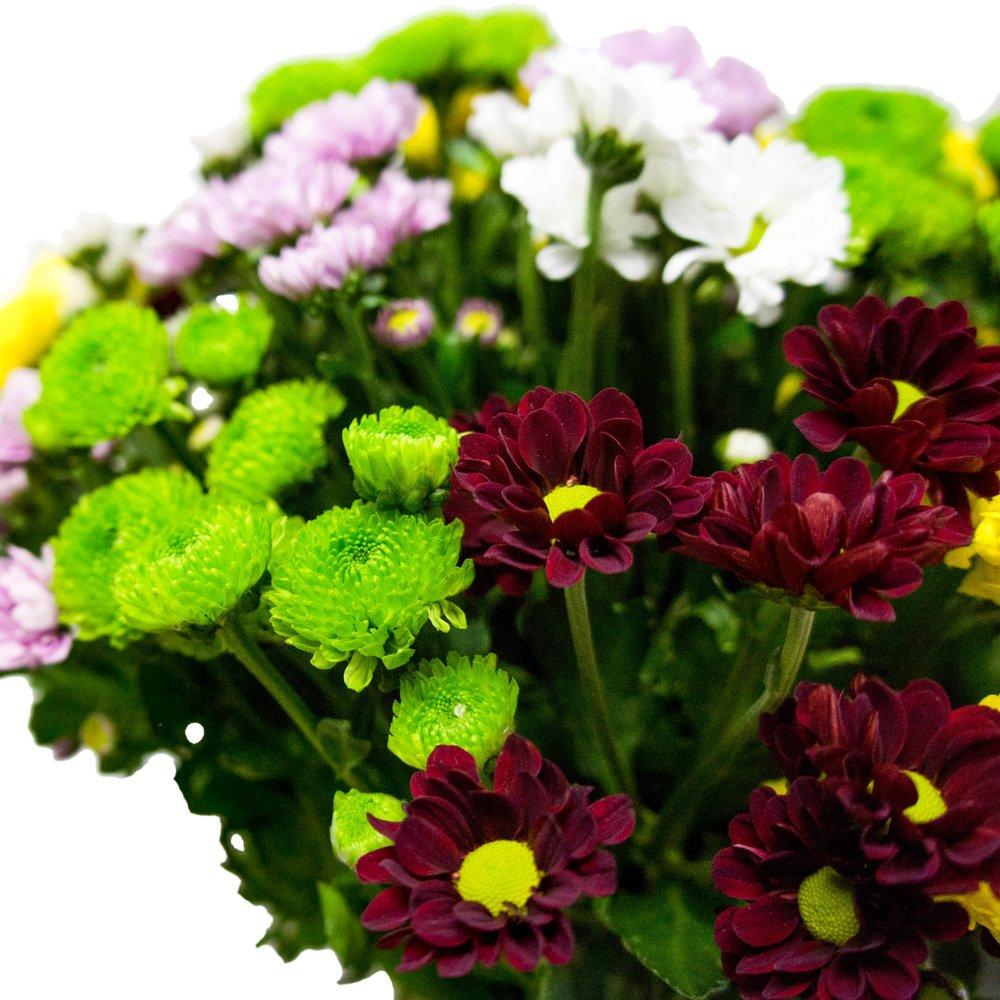 Хризантема Сантини разноцветный микс