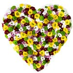 Хризантемы Сантини в коробке в виде сердца.