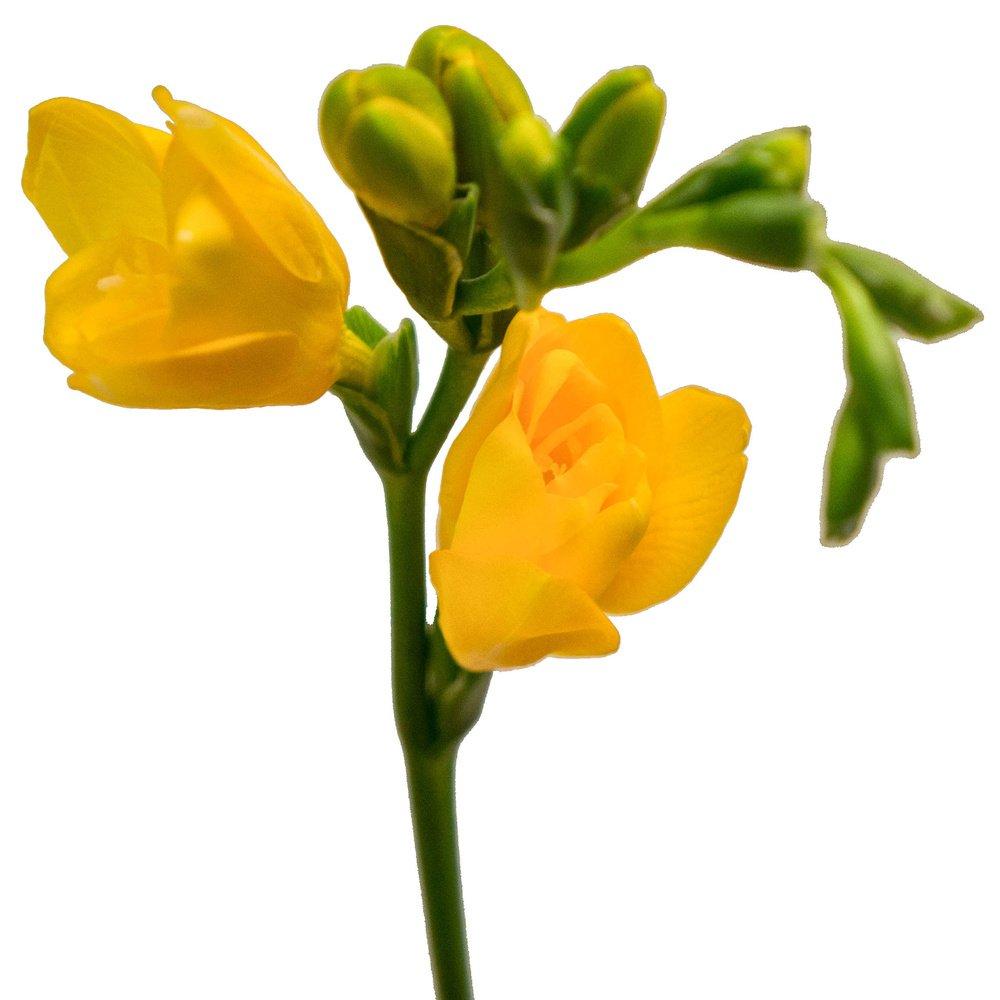 Жёлтая фрезия