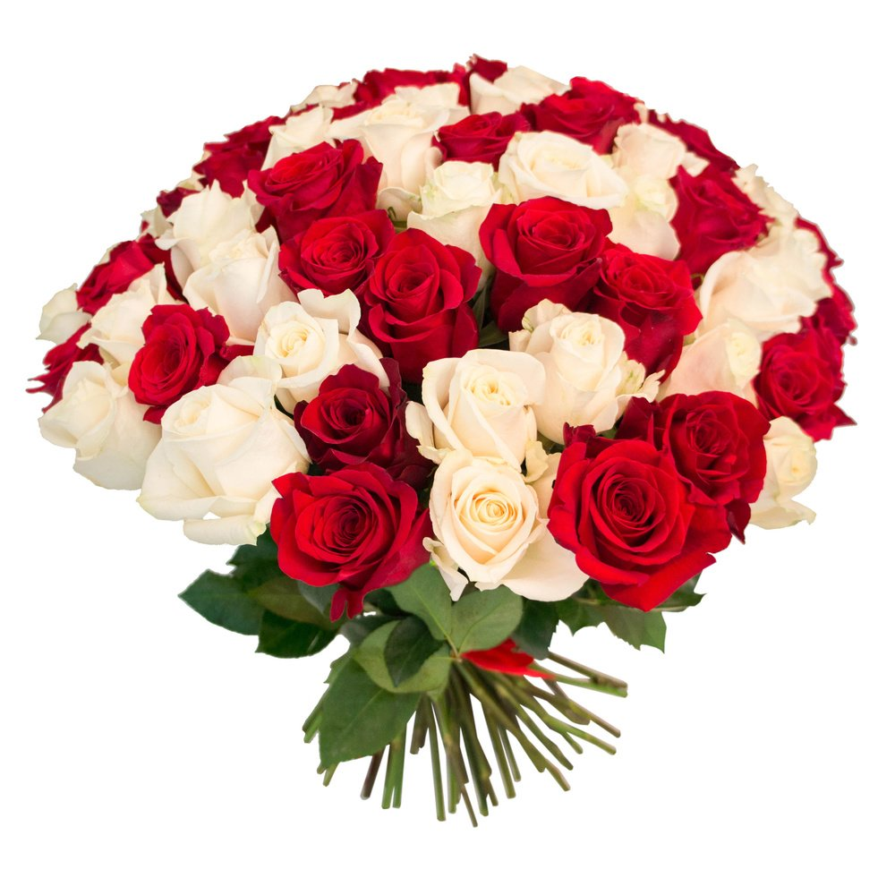 75 красных и белых роз