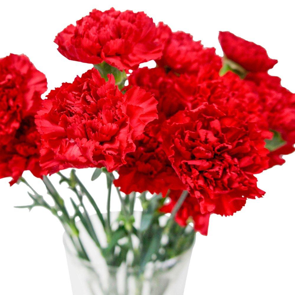 Открытки, картинки с красивым букетом цветов гвоздики