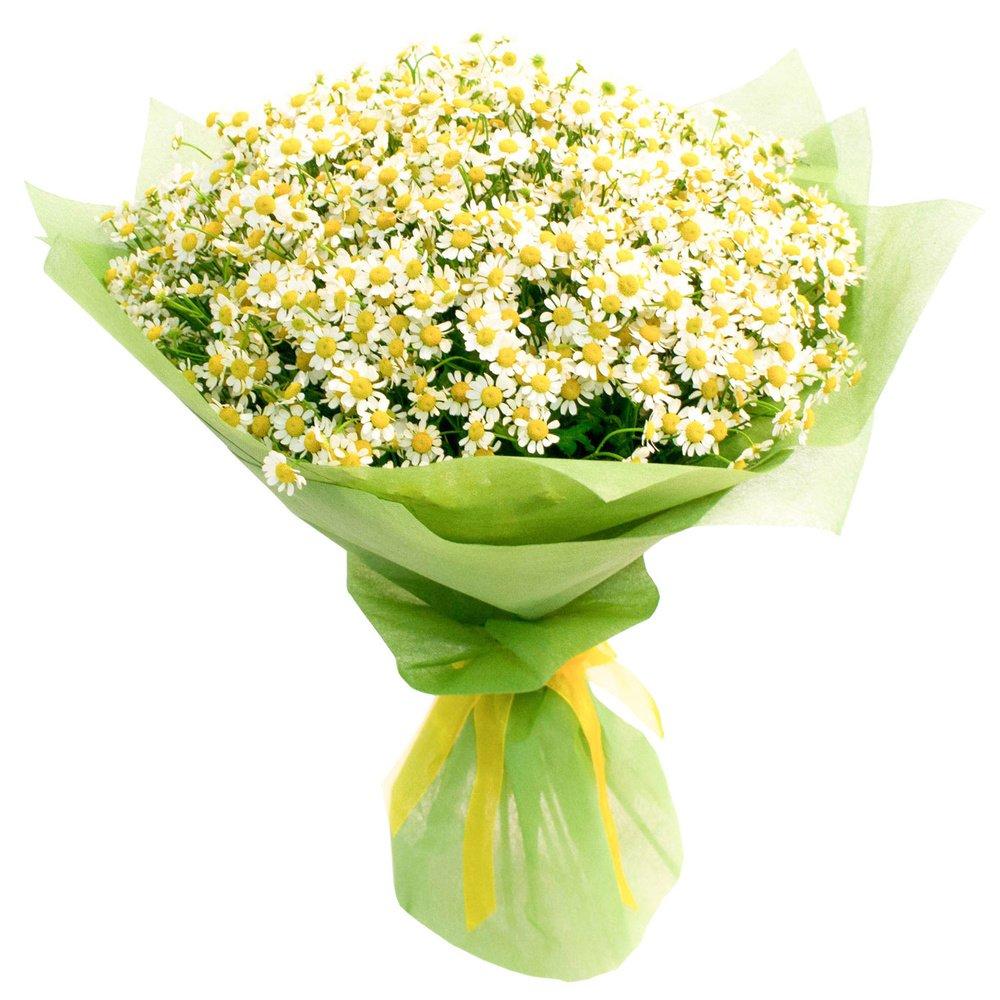 Доставка цветов санкт петербург ромашки ярославль доставка цветов курьером