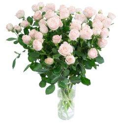 Букет из кустовых пионовидных роз Бомбастик в Санкт-Петербурге