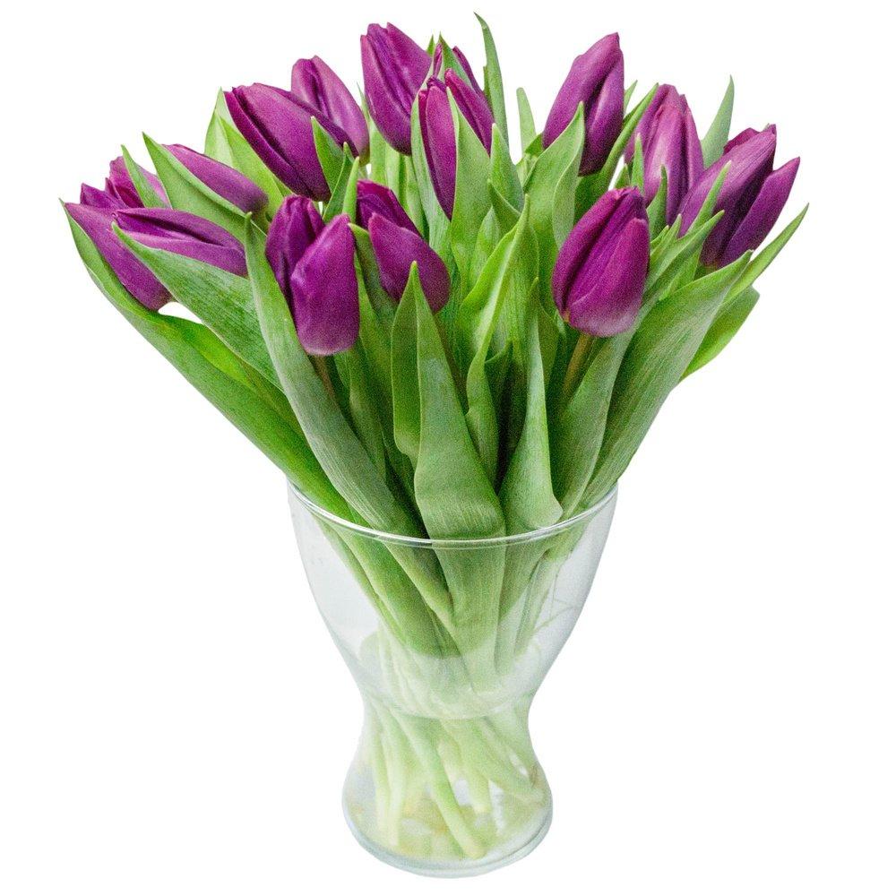 Нереальные, магические тюльпаны в фиолетовом цвете. Поразите свою девушку.