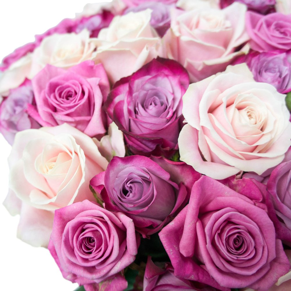 51 розовая и фиолетовая роза