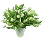 Тюльпаны Версаль