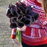 Букет из чёрных калл в Санкт-Петербурге