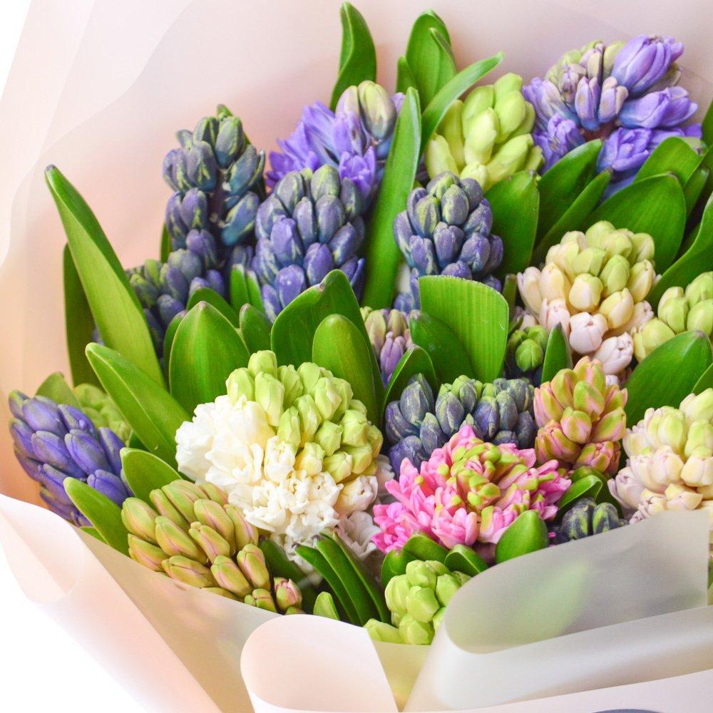 25 разноцветных гиацинтов в упаковке