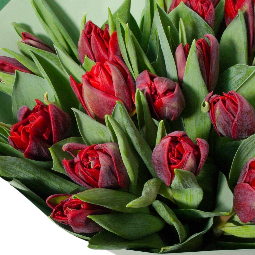 21 красный пионовидный тюльпан в упаковке