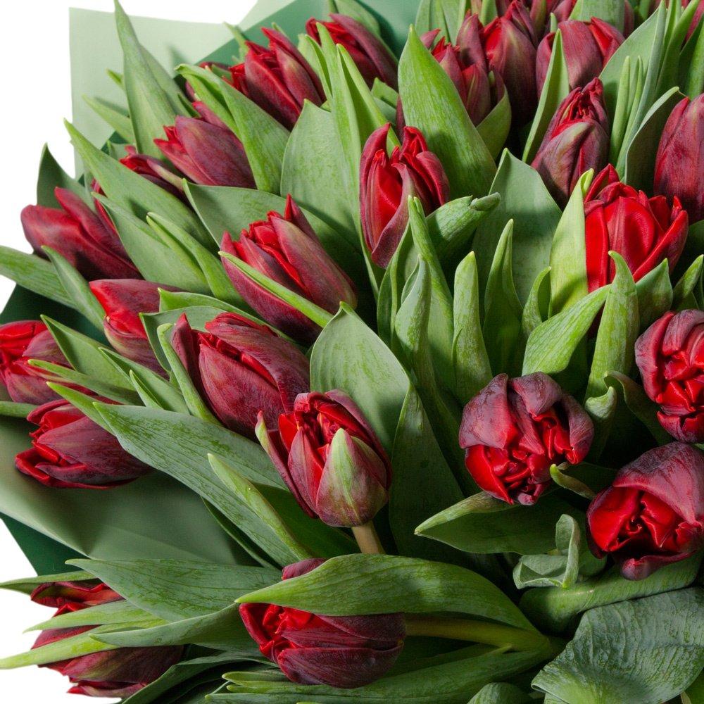 51 красный пионовидный тюльпан в упаковке
