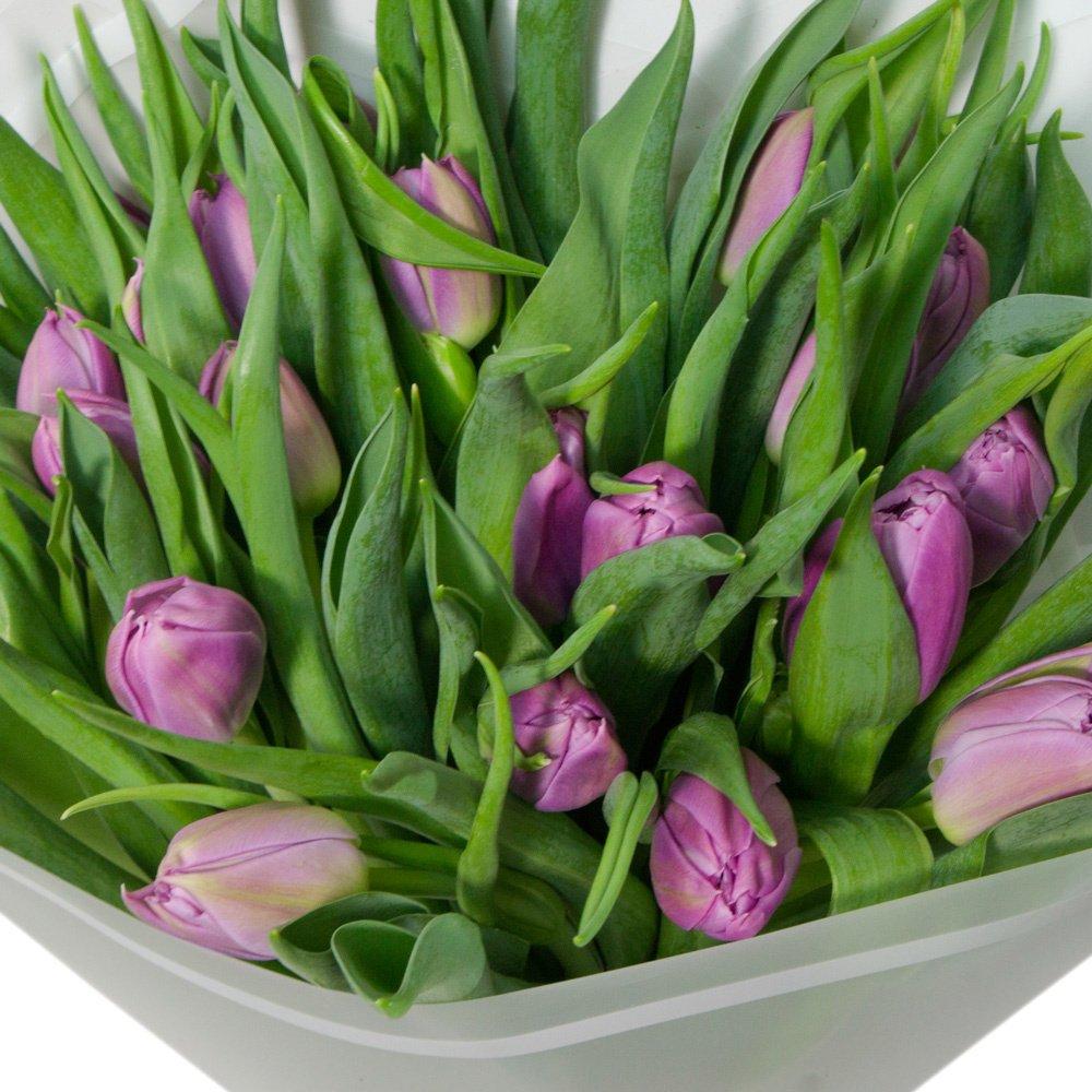 25 сиреневых пионовидных тюльпанов в упаковке