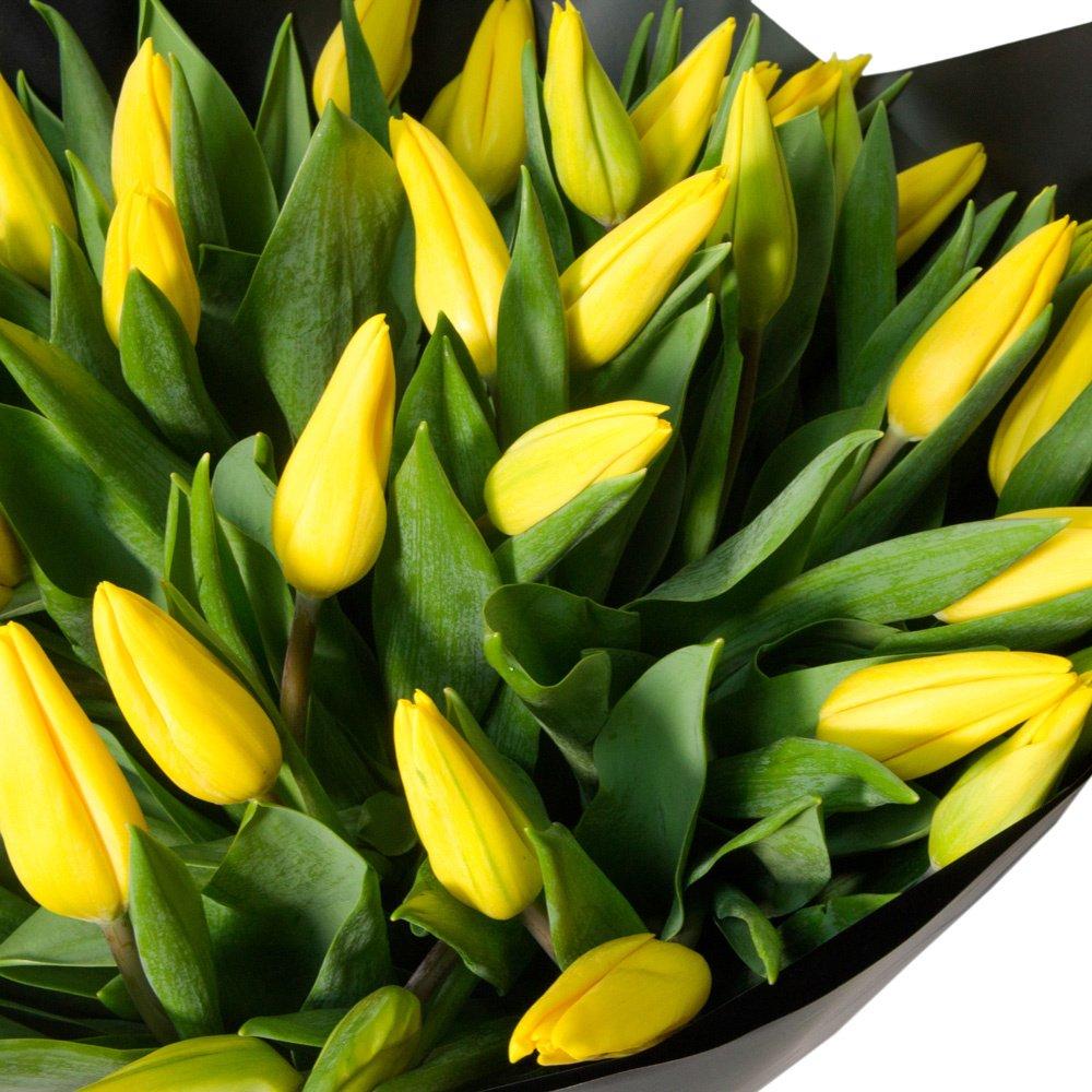 51 жёлтый тюльпан в упаковке