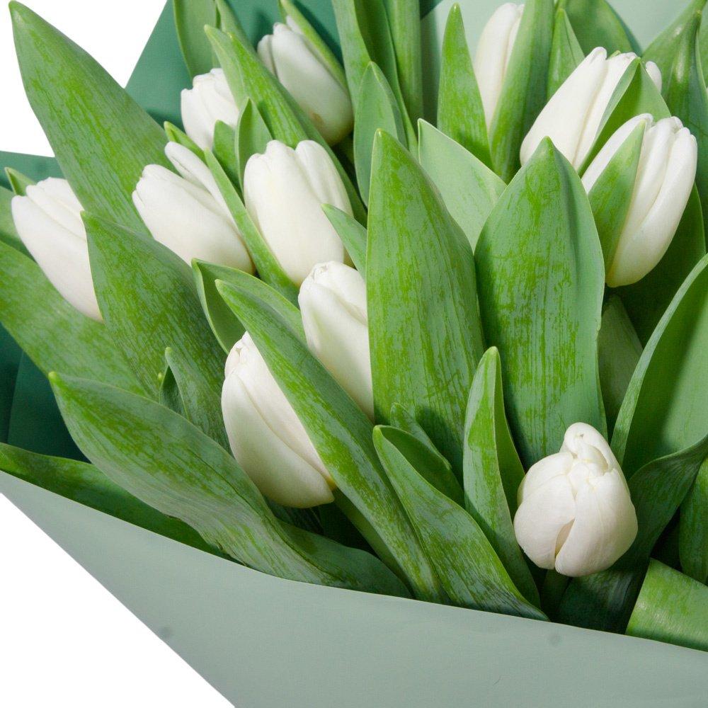 25 белых тюльпанов в упаковке