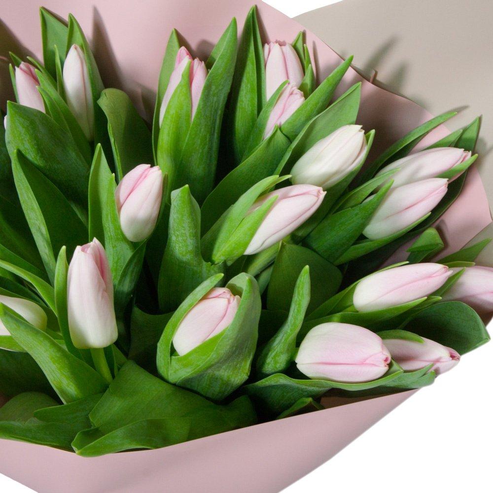 21 розовый тюльпан в упаковке