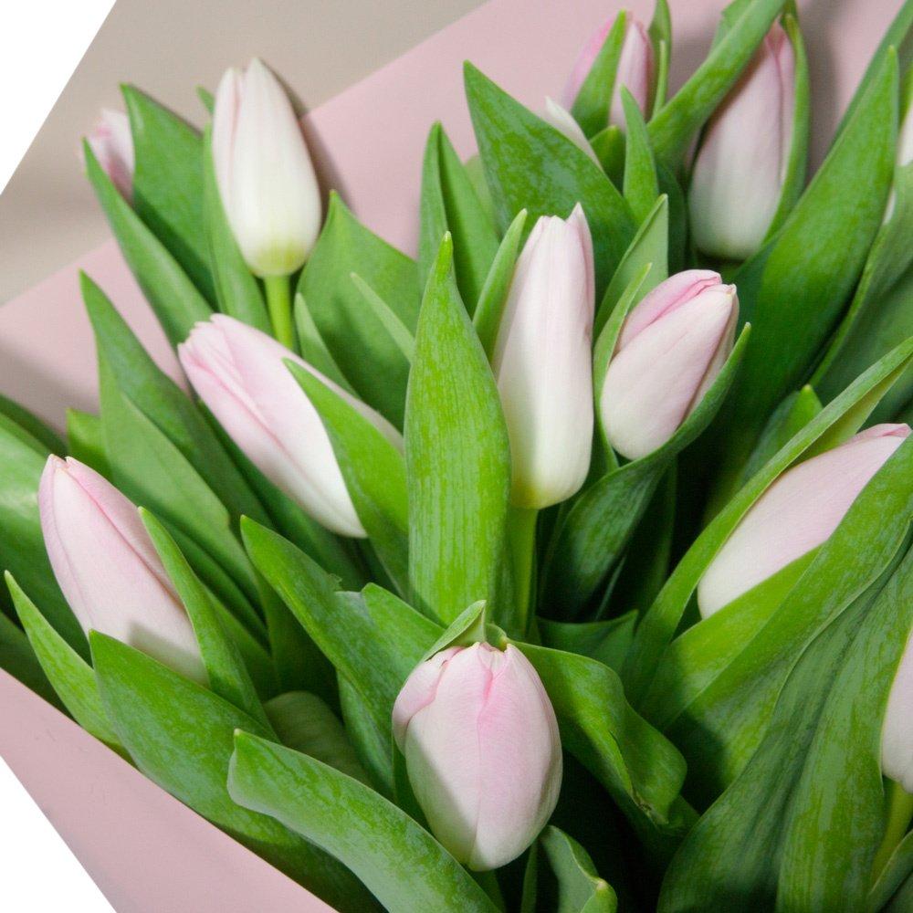31 розовый тюльпан в упаковке