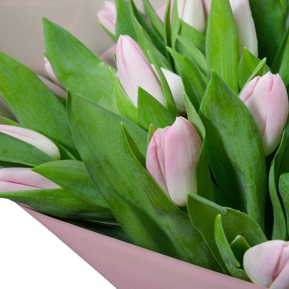 51 розовый тюльпан в упаковке