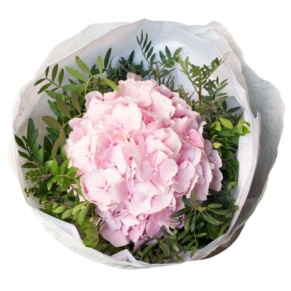 Розовая гортензия в упаковке