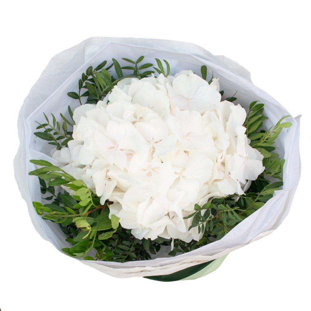 Белая гортензия в упаковке