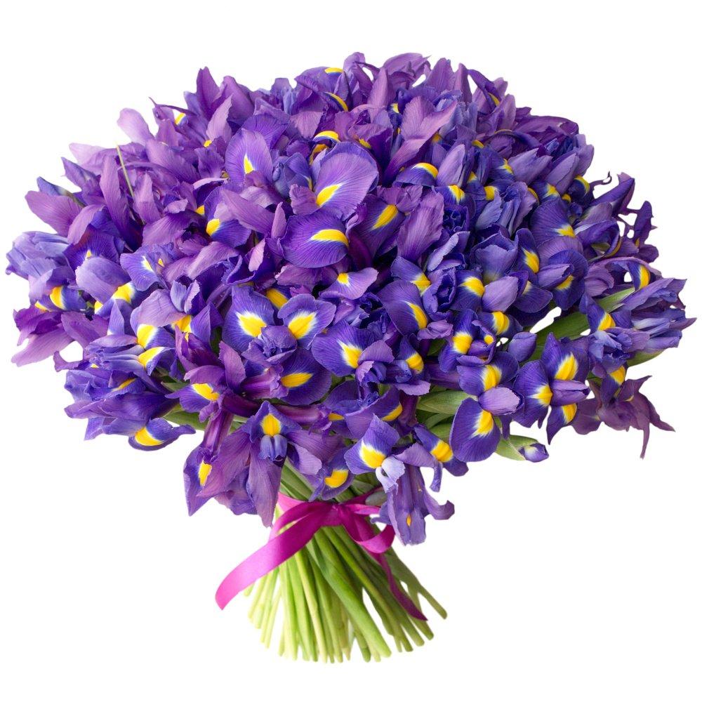 ирисы фото цветов букет сенчина советская