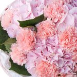 Букет из розовых гортензий и розовых гвоздик в упаковке в Санкт-ПетербургеБукет из розовых гортензий и розовых гвоздик в упаковке в Санкт-Петербурге