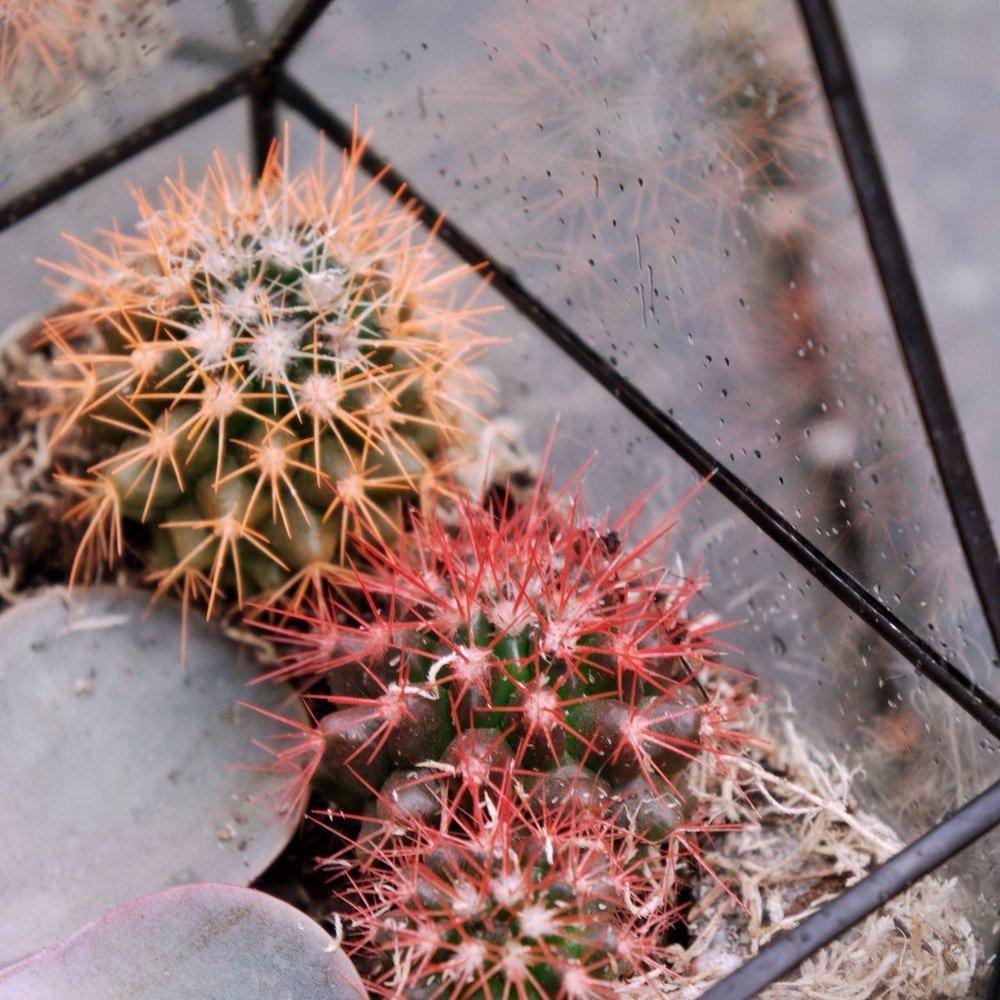 № 2. Очаровательный домик для суккулента и кактусов