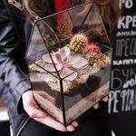 Небольшой комнатный флорариум в виде домика с суккулентом и кактусами в Санкт-Петербурге