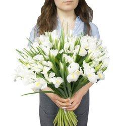 Букет из 51 белого ириса в Санкт-Петербурге