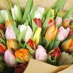 Букет из 51 разноцветного тюльпана с доставкой в Санкт-Петербурге