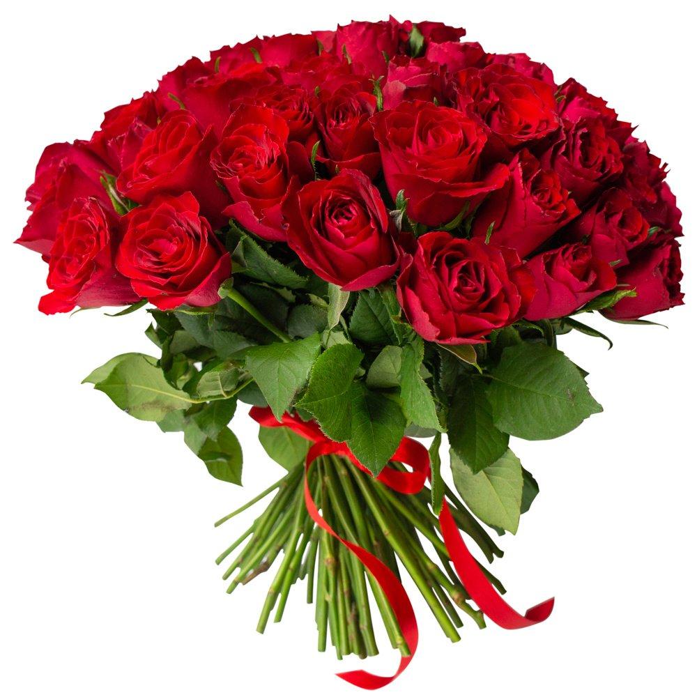 Роза Кения красная 75 штук