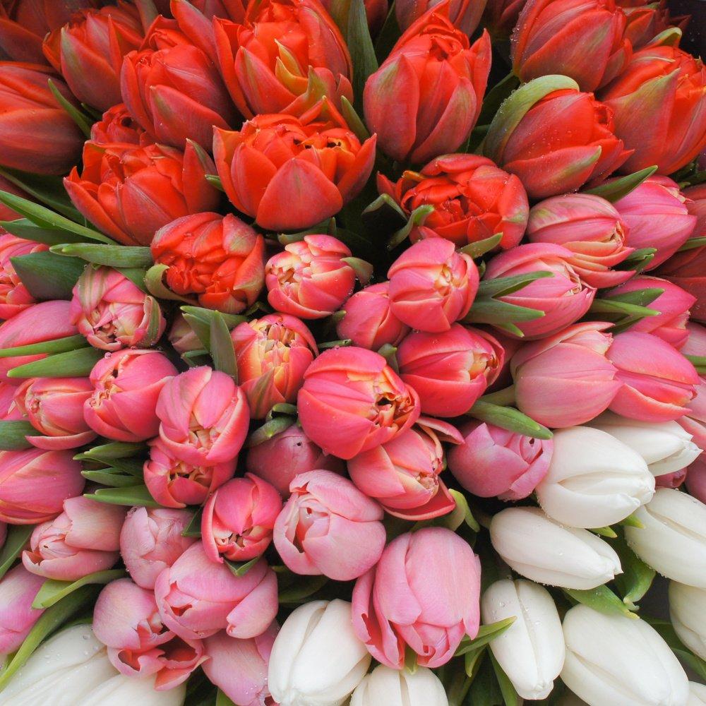 Букет омбрэ из тюльпанов