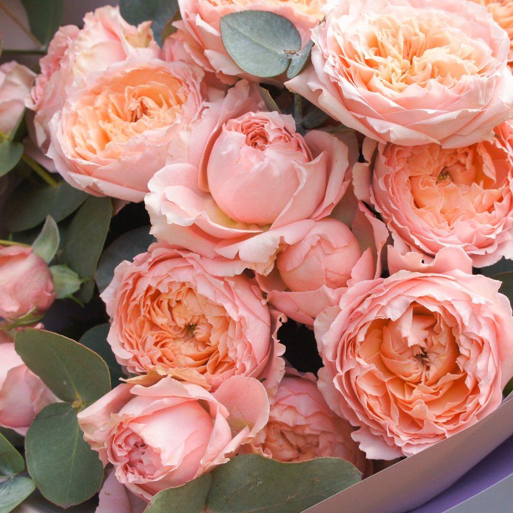 Пионовидные кустовые розы Джульетта в упаковке