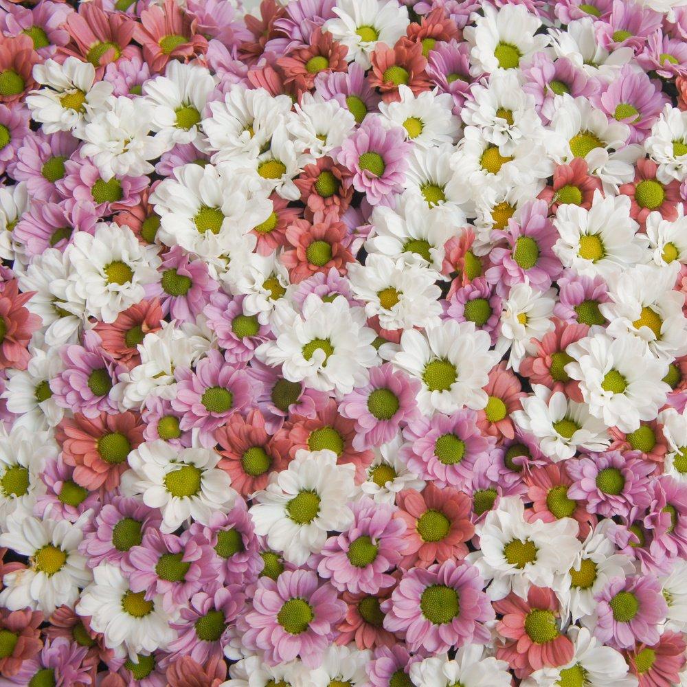 Сердце из цветов №5 с хризантемами Сантини