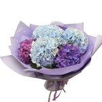 Букет из голубых и фиолетовых гортензий в упаковке в Санкт-Петербурге