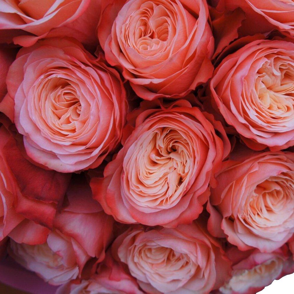 25 роз Кахала в упаковке
