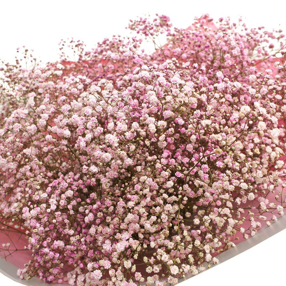 цветы гипсофила валентинка фото