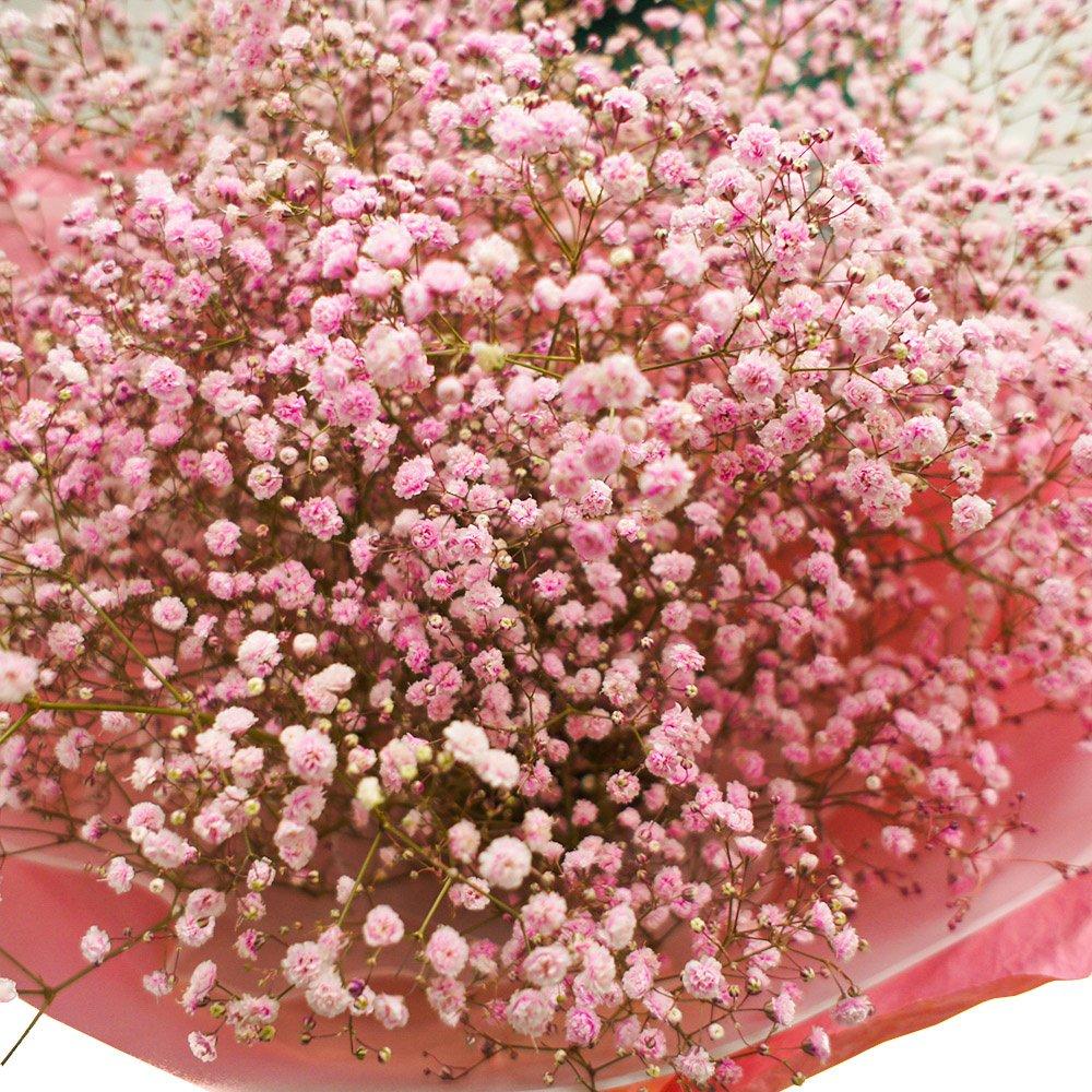 цветы гипсофила валентинка фото того, вашему